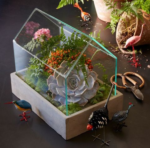 With its concrete base and simple, stylish design, the House Terrarium is great for arranging your succulents, ferns and small flowers. Glass house with a concrete base. Terrarium Diy, How To Make Terrariums, Terrarium Centerpiece, Indoor Garden, Indoor Plants, Paludarium, Cactus Y Suculentas, Cacti And Succulents, Small Flowers