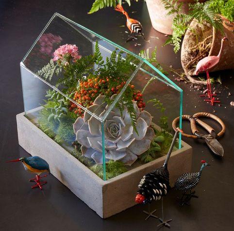 C mo hacer un jard n en miniatura los terrarios - Como preparar un jardin ...