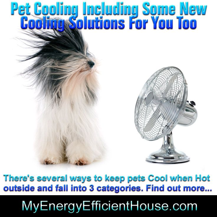 Keep You And Your Pets Real Cool This Summer Dog Pools Cat Pools