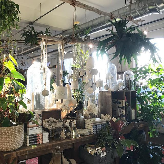 Open 10-7 through Thursday| Friday 9-9(cause we are insane) Saturday 9-7 and Sunday 10-3! So busy keeping the shop stocked with all of your favorite goodies! 🌿🌿🌿 #shopsmall #houseplantclub #staghorn #seedtostem #terrariums #giftshop #lifestylestore