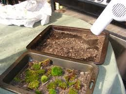 Teaching a unit on erosion? Use a pan of dirt to show erosion caused by wind (hair dryer), water, or glacier (ice cubes).