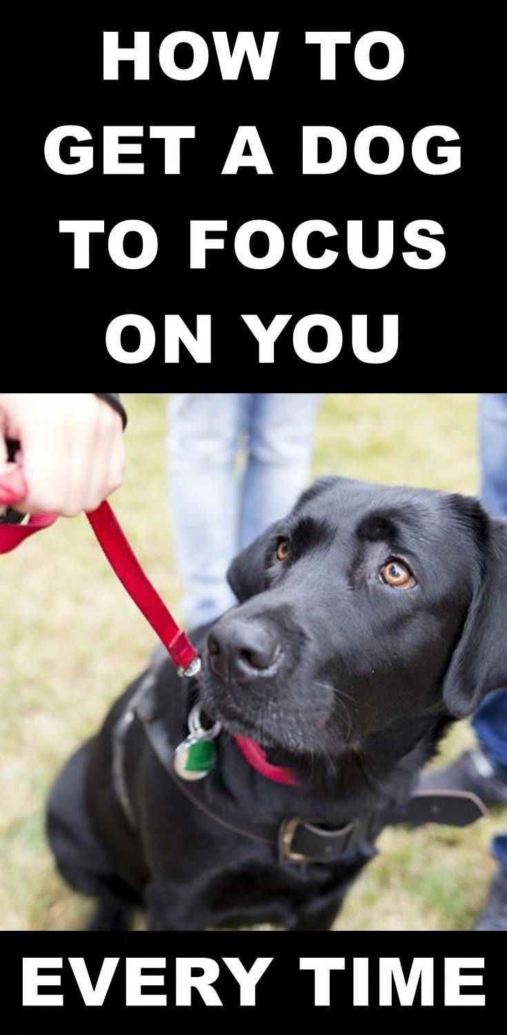Become The Pack Leader Dogs Dog Training Dog Psychology