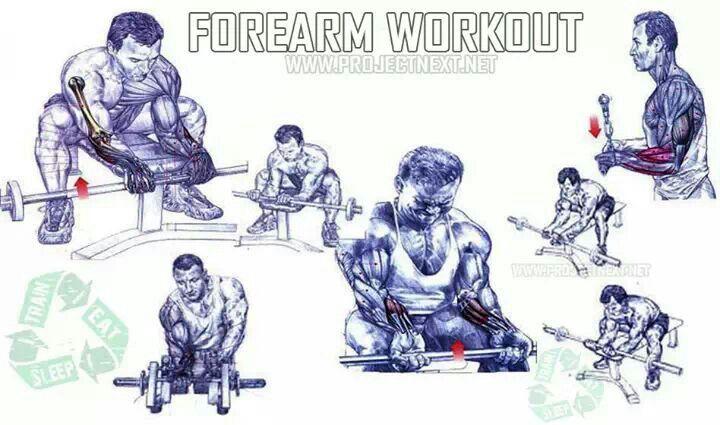 forearm workout chart - Google Search | Workouts ...