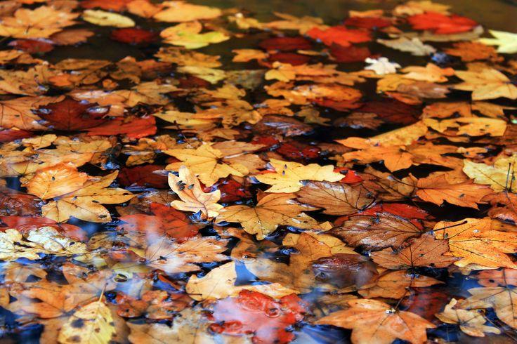 Underwater leaf carpet