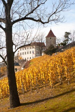 go2prague.com Prague Castle Wenceslas Vineyards. Wine harvest through the course of history