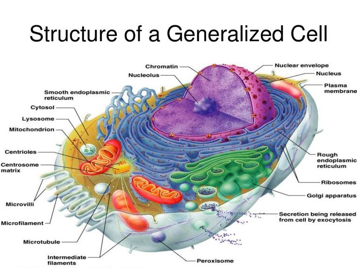 Famous The Cell Anatomy And Physiology Photo - Anatomy And ...
