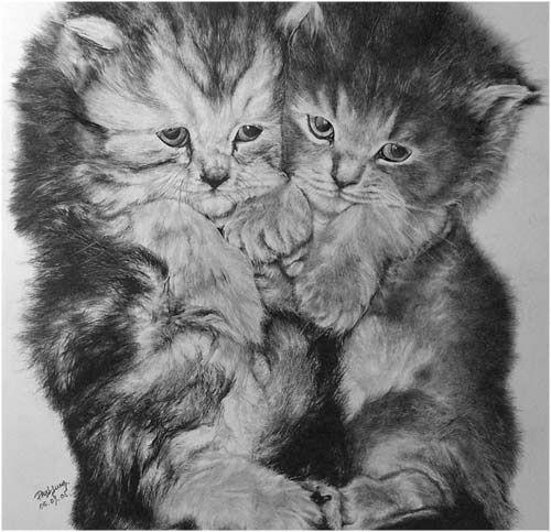 Dibujos hiperrealistas de gatos | La Reserva
