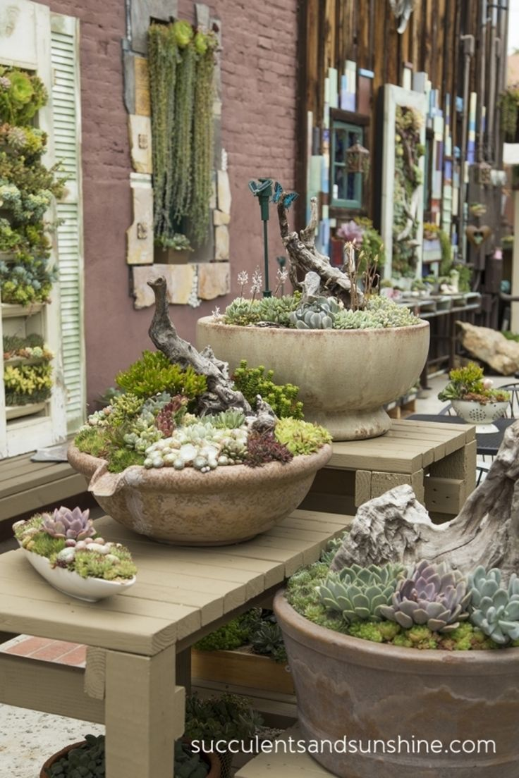 43 #Outstanding Succulent Gardens You Can Create at Home .