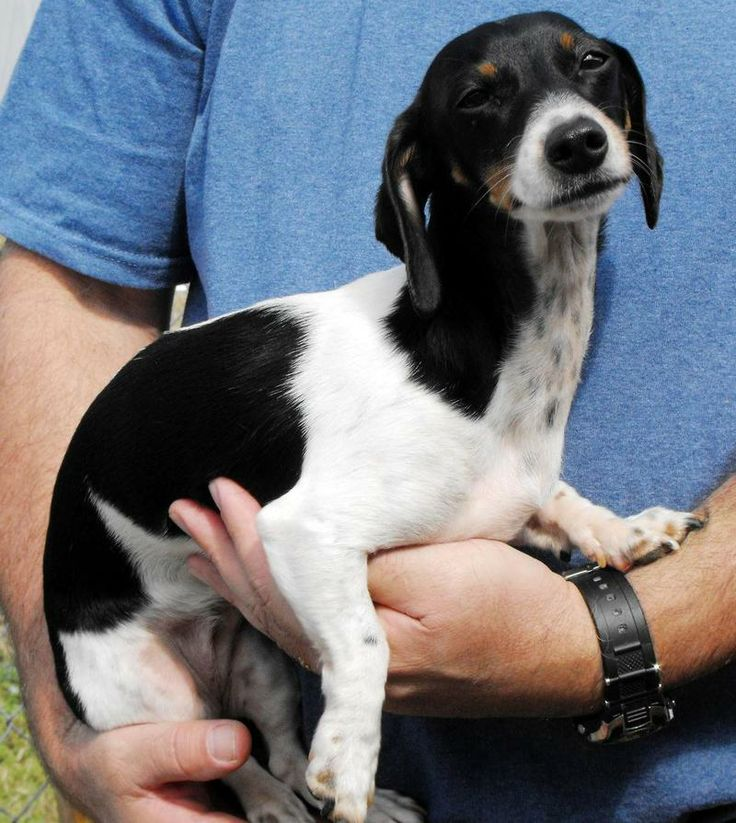 Adoptable Dog Bc