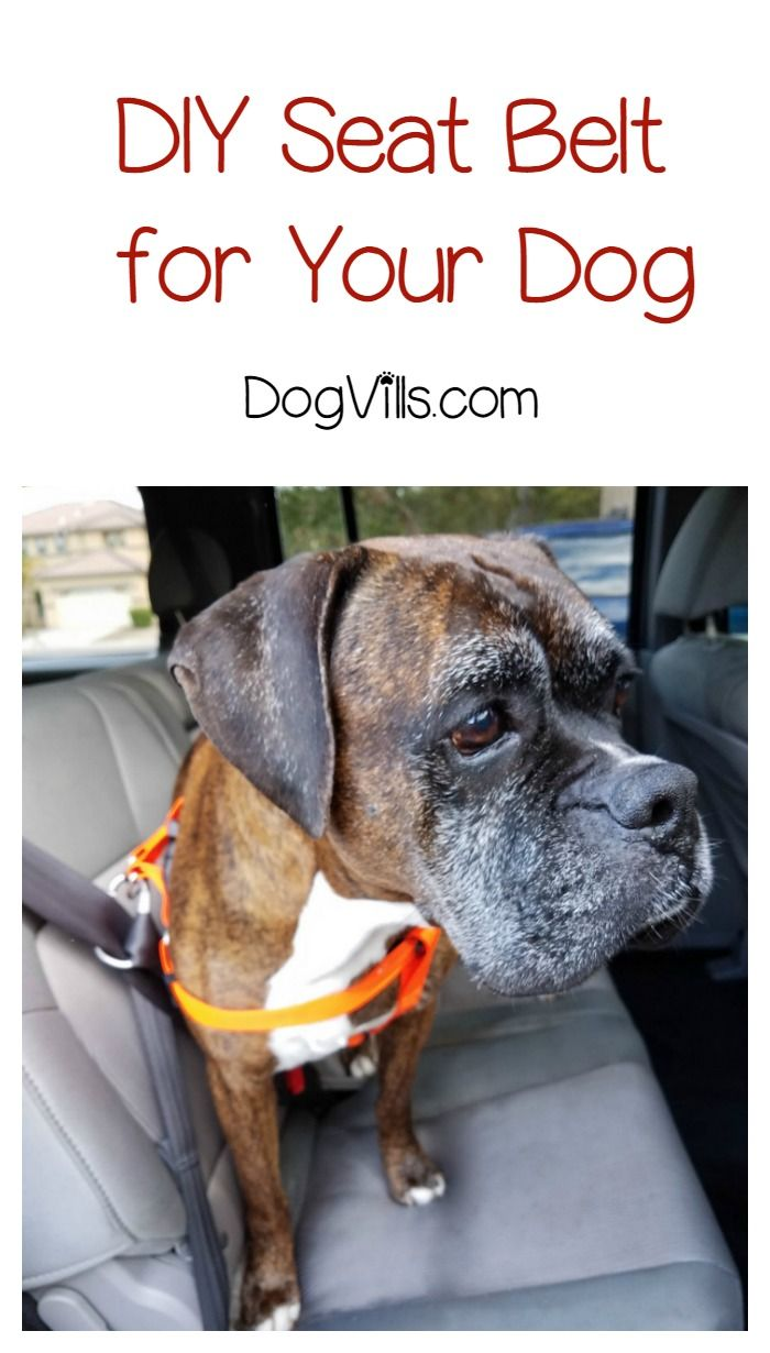 Keep your pooch safer during car rides with our clever and simple DIY dog seat belt! Check it out!