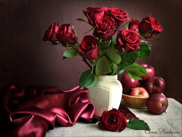 фото красных роз 06