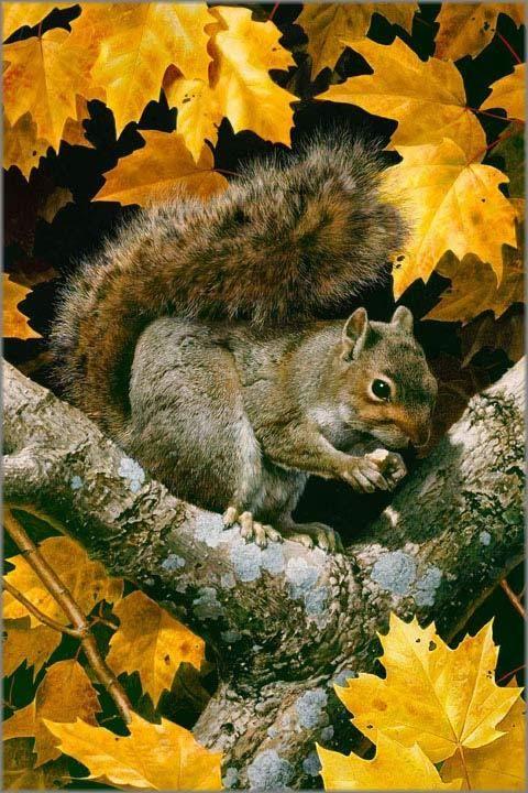 "Carl Brenders ""Golden Season - Gray Squirrel"" 2012"