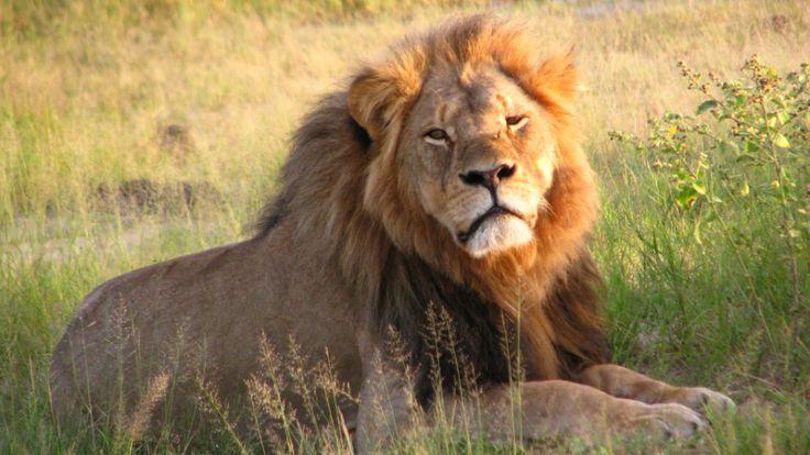 Spotlight on big game trophy hunting -