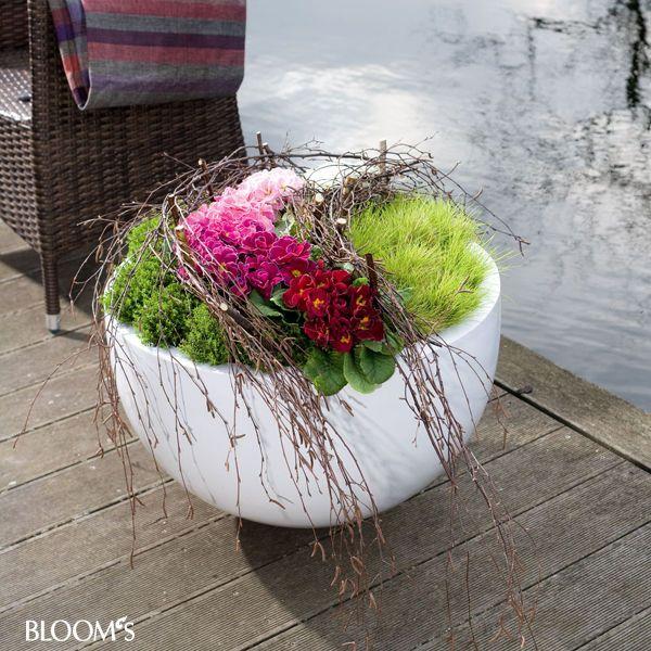 Mit Primeln Kübel bepflanzen: Kübel mit Birkenzweige-Zaun #Garten #diy