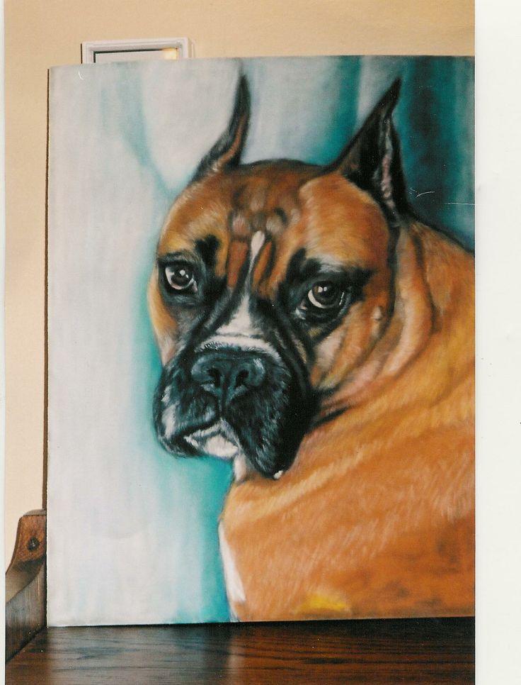 Boxer soft pastel on suede board. Artist Gail Flint