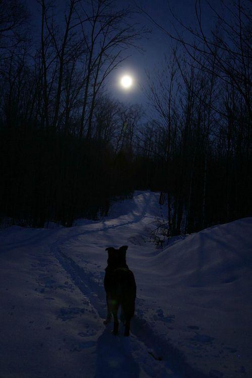 *On a Winter Night.....