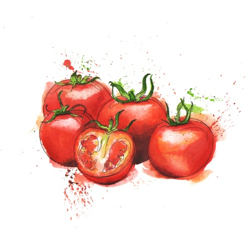 Tomatoes in watercolours, by Georgina Luck
