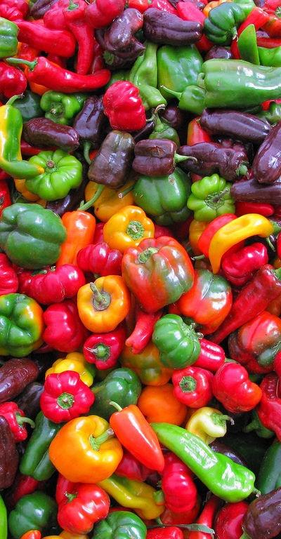Colorful veggies ✽http://PhilosBooks.com✽