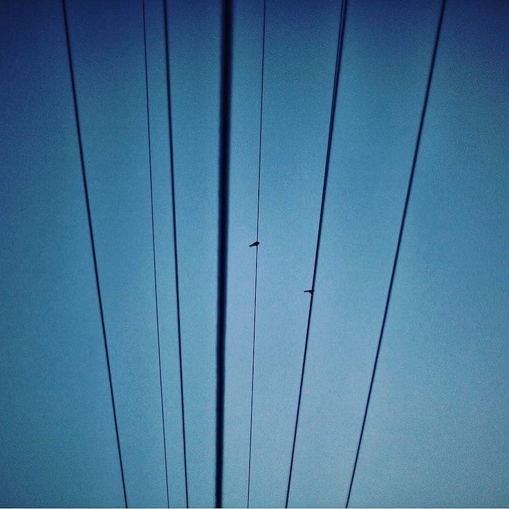 #isjon_isgood Sometimes simplicity is the ultimate sophistication #bird #sayings #design #minimalism #art #artist