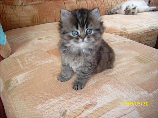Tausende Fotos süßer Katzen erreichten die Redaktion: Hier sehen Sie Teil 13 der tierischen Bewerber.