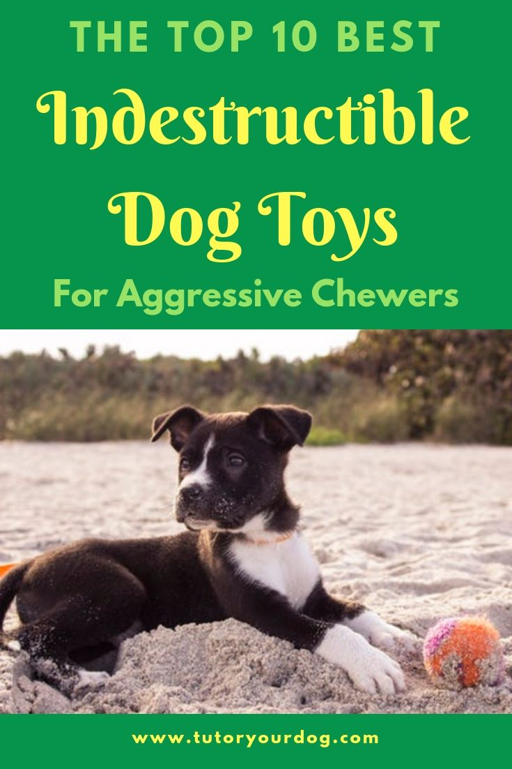 The Top 10 Best Indestructible Dog Toys For Aggressive Chewers