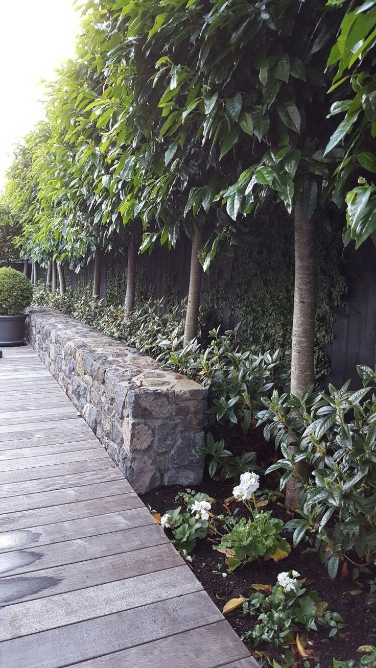 beautiful rock wall,decking,rhododendron princess Alice and Portuguese laurels