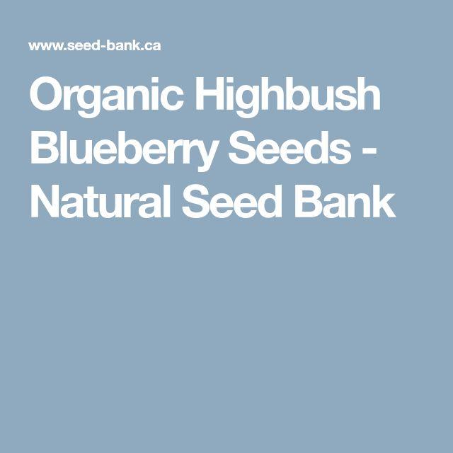 Organic Highbush Blueberry Seeds - Natural Seed Bank