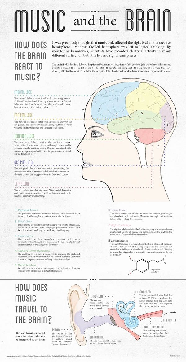 Infographic created for class. I researched the effects that music has on the brain. I wanted to highlight that every lobe is active when listening to music.I wanted to establish a style that is both elegant and structured in order to mesh the topics of…