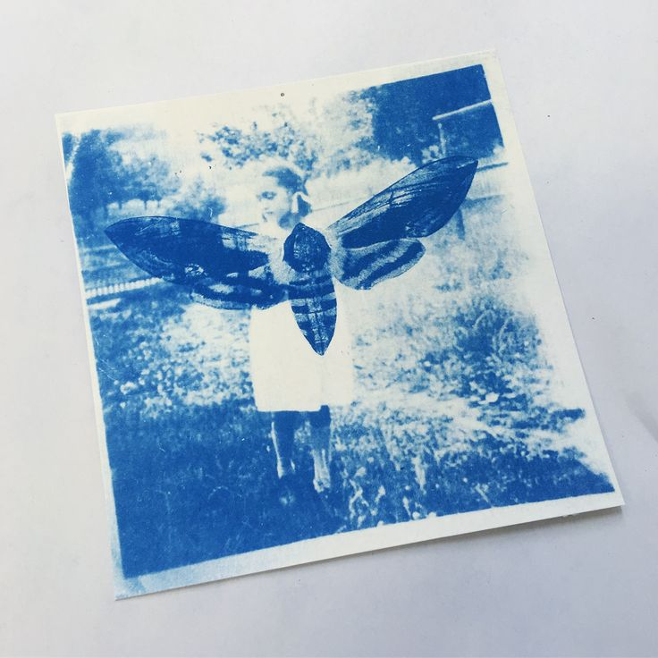 Cyanotype 'Distant Memory' by Georgia Steele  #cyanotype #art #photography #design #moth #memory #artist   https://www.etsy.com/au/shop/GeorgiaSteeleDesign?ref=pr_shop_more