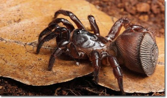 31 best Spider images on Pinterest | Bugs, Animales and Beautiful ...
