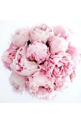Peony's.. Favourite flowers