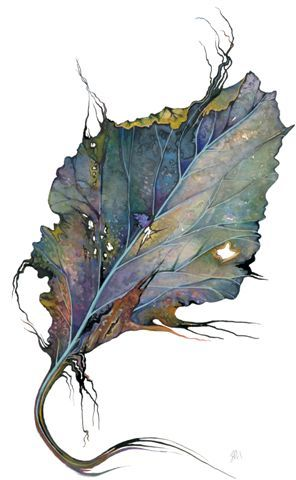 Jane Murray - watercolor cabbage leaf