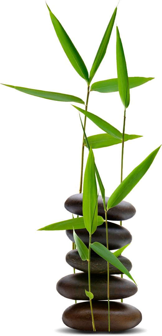bamboo+(3).png (521×1080)