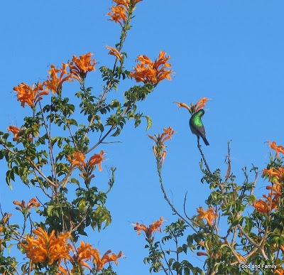 South Africa's Western Cape in autumn. Flowers, birds and gorgeous colours.  food-and-family.blogspot.com