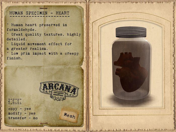 {A} Human Specimen - Heart