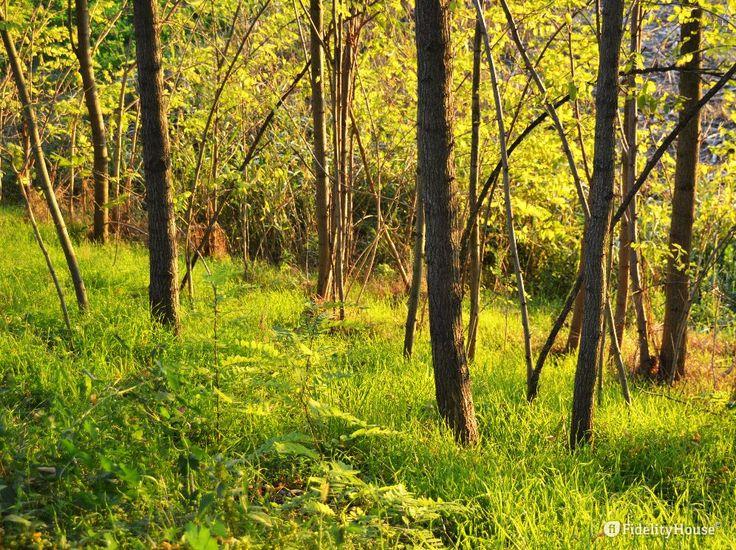 E l'erba è sempre verde! Siamo in autunno, ma la vivacità dell'erba potrebbe far pensare alla primavera.
