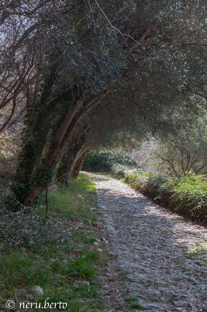 Ulivi - via Santa Lucia - Nago