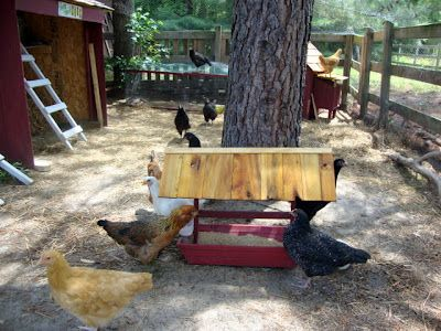 Great post on integrating pullets into your established flock.