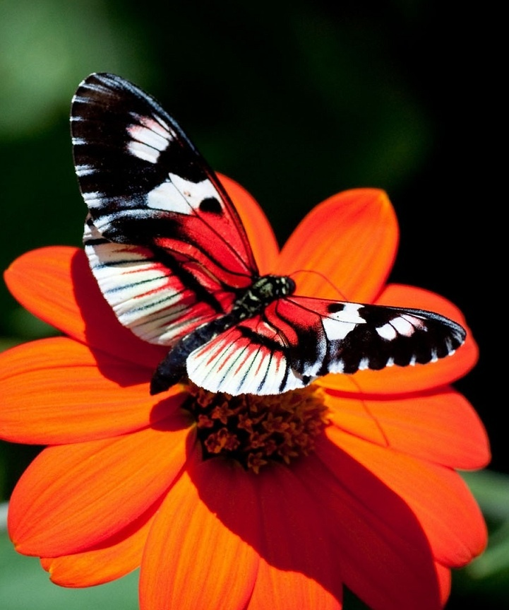 "440 Best Images About BUTTERFLIES ARE ""BEAUTIFUL"" On"