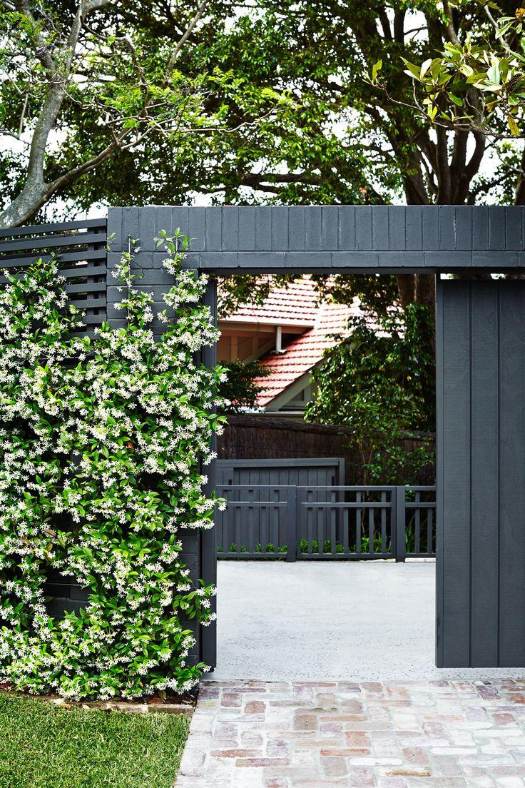 Star Jasmine on boundary fence - Outdoor Establishments