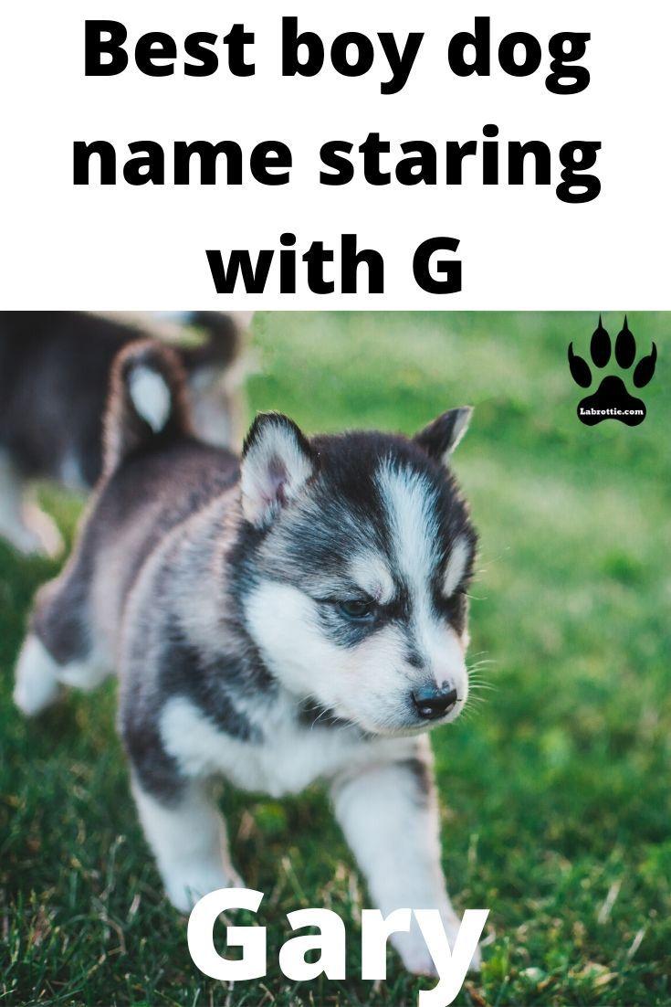 400 Boy Dog Names A Z In 2020 Girl Dog Names Boy Dog Popular Dog Names