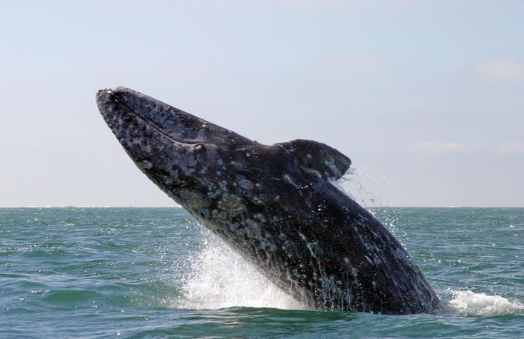 Go Whale watching!!