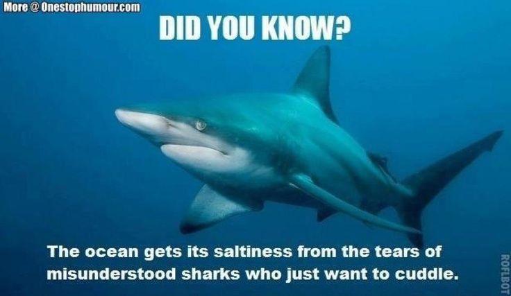 Best Funny Quotes Top 28 Shark Week Memes July 23 2018 We Celebrate Sports Week Musical Nig Misunderstood Shark Shark Week Memes Sharks Funny