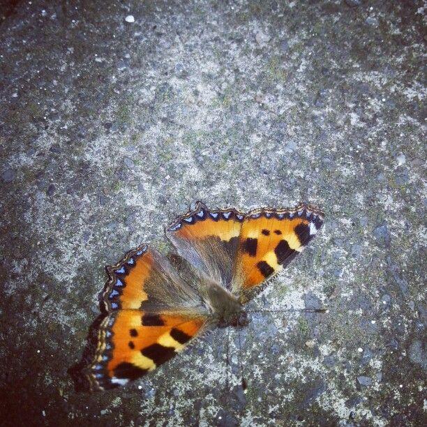 Butterfly. D7