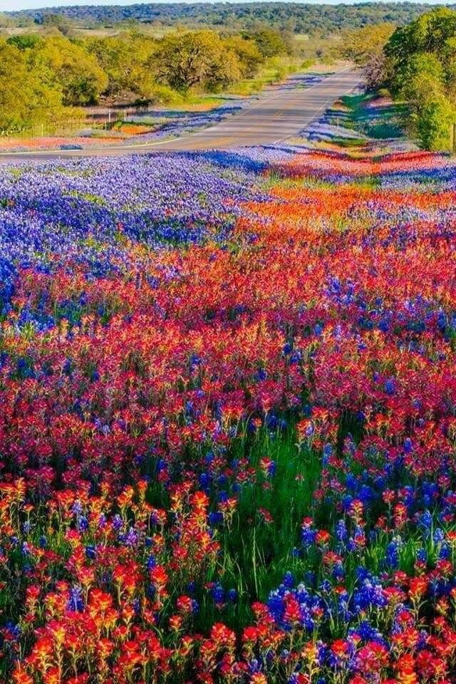 Llano Tx Beautiful Landscapes Beautiful Nature Wild Flowers
