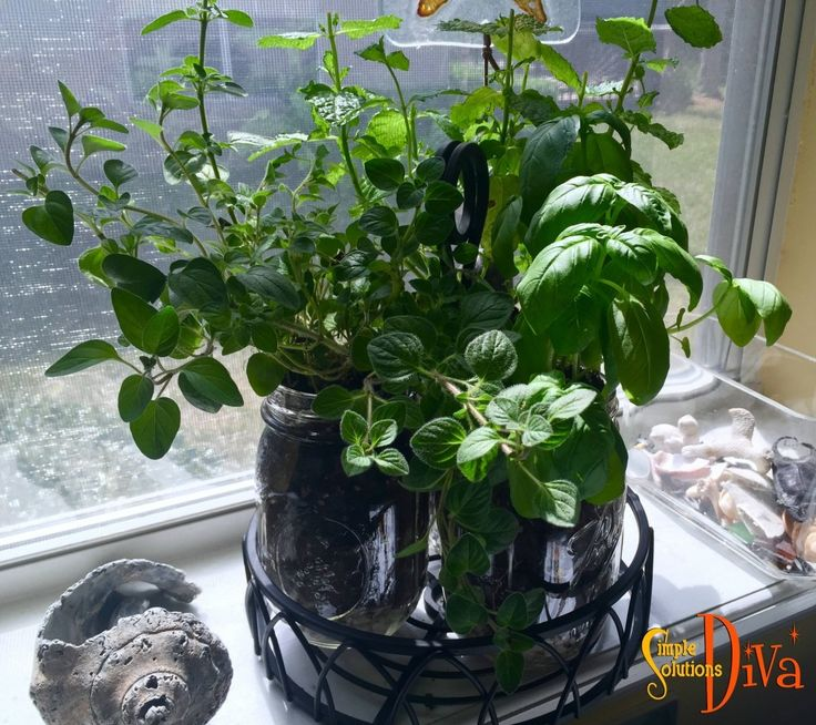 i love to cook with fresh herbs and this little windowsill herb garden features my favorites i use all the time the plant holder is something an iron