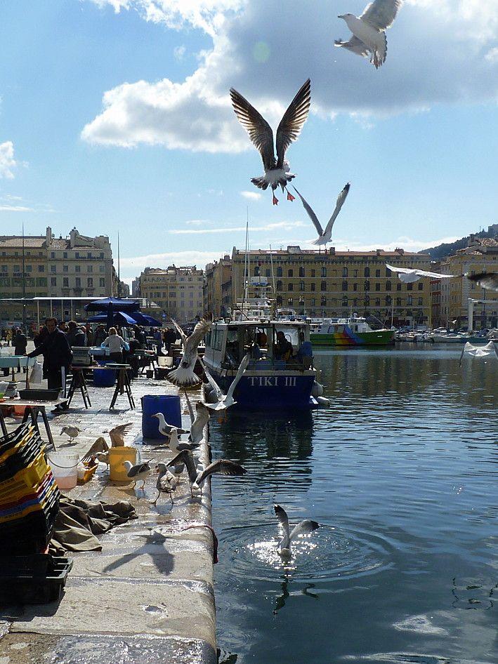 mouettes sur le vieux port Marseille