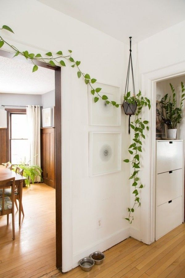 Creative way to decorate a wall corner with a hanging pothos vine planter @istandarddesign