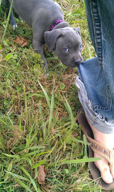 "Puppy-Dog:  ""Wait up please!  Unsure if I want to go walking into THOSE backwoods!"""