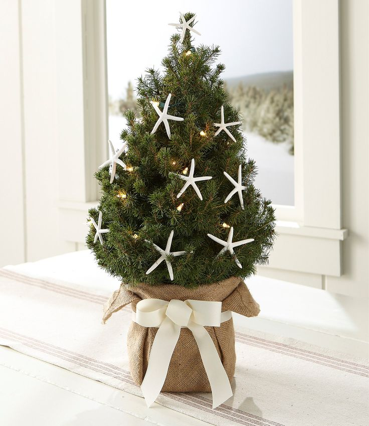 65 best Christmas pots, conifers, plants, decorations images on - mini christmas tree decorations